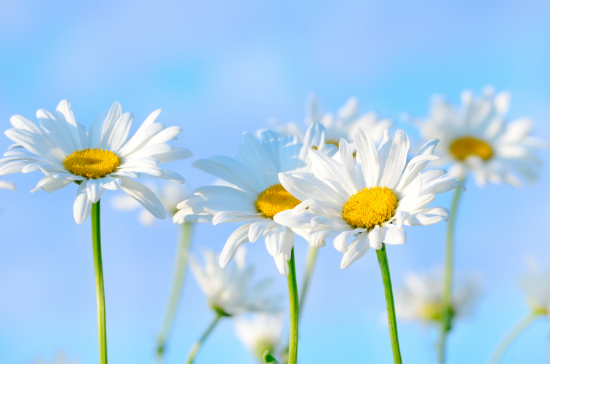 Mental and emotional health are helped with looking at bright flowers and colours